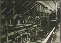A baldwini (Amerika) kertészet melegháza