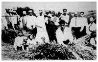A tolnamegyei Nagykónyban Sudár Imre községi bíró úri aratást rendezett.