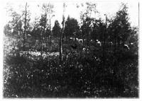 A legelőn a fatávolság az átlagos fa magasságával egyenlő