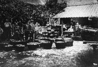A kecskeméti termelők a barackot beadják a gyümölcsközpontba