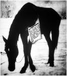 A gazdátlan ló