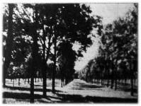 Egy mintaszerűen fásított községi legelő