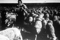 Birkanyáj húsvéti bárányokkal