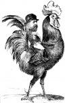 A gall kakas, Franciaország jelképe